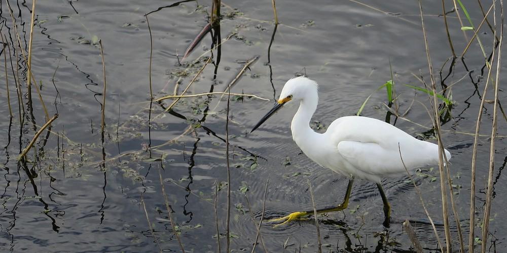 Mayakka River State Park Sarasota Florida