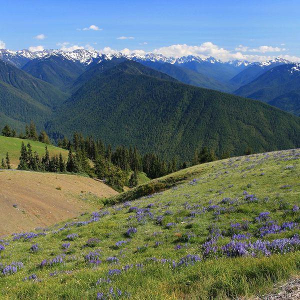 Huricane Ridge - Olympic National Park - Washington State - Amerika - Doets Reizen
